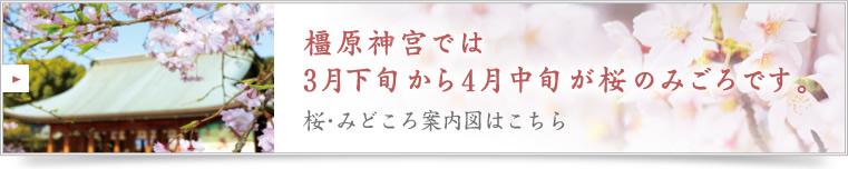 橿原神宮では3月下旬から4月中旬が桜のみごろです。桜・みどころ案内図はこちら